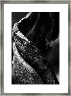 Themselves Alone Framed Print by Rebecca Sherman