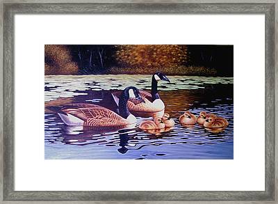 There Are Seven Ducks Out Here And They All Want Sun Chips Framed Print by Yuki Othsuka