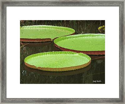 There Are Three Framed Print by Judy  Waller