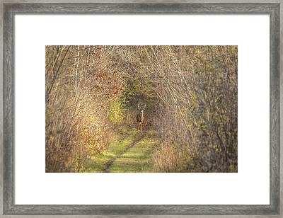 There He Is 2015-1 Framed Print by Thomas Young