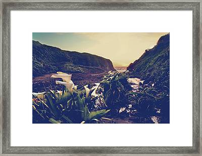 There Is Harmony Framed Print