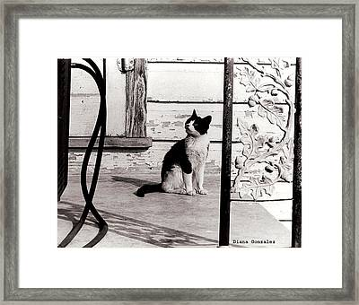 There Once Was Framed Print by Diana Gonzalez