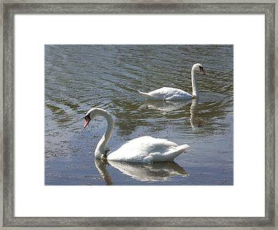 There She Goes Again Framed Print by Sholeh Mesbah