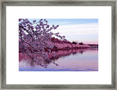 There Was A Time Framed Print by Iryna Goodall