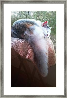 Thereby Hangs A Tail Framed Print