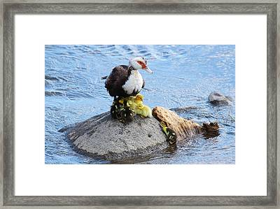 There's Room For One More? Framed Print by Paulo Nogueira