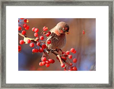 These Berries Are Making Me Dizzy  Framed Print