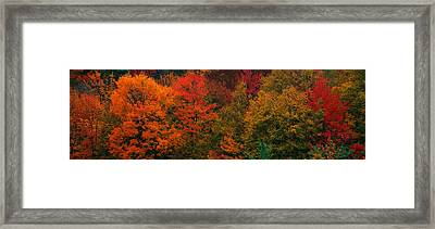 These Shows The Autumn Colors Framed Print
