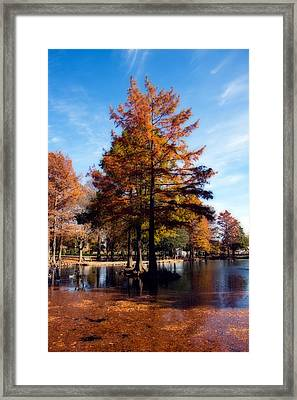 Theta Pond Framed Print by Lana Trussell