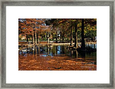 Theta Waterfowl Framed Print by Lana Trussell