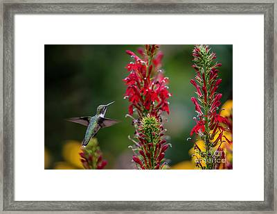 They All Look Yummy Framed Print