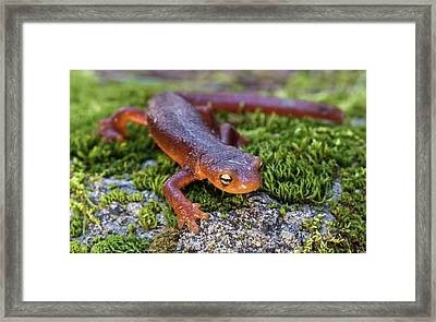 They Do Exist Framed Print by Scott Warner
