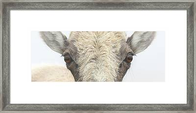 Grandma, What Big Eyes You Have Framed Print