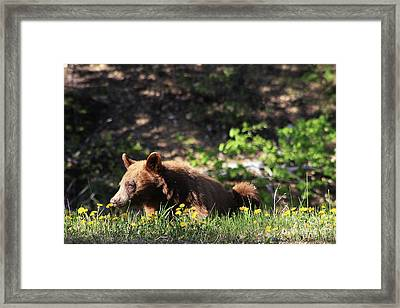 They Smell So Good Framed Print