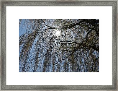 Thick And Thin -  Framed Print