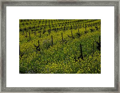 Thick Lush Mustard Grass Framed Print by Garry Gay