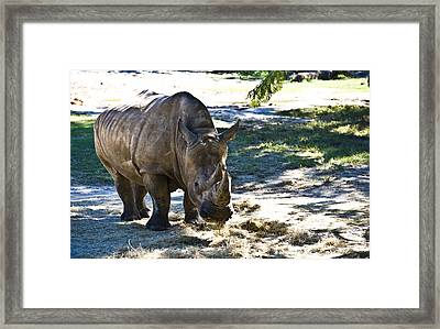 Thick Skinned Framed Print by Sarita Rampersad