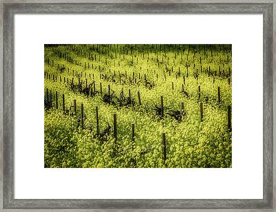 Thick With Mustard Grass Framed Print by Garry Gay