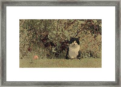 Thief Of Hearts Framed Print by Wild Thing