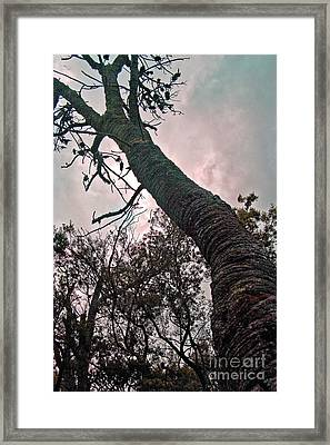 Things Are Looking Up Framed Print by James  Dierker