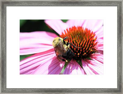 Framed Print featuring the photograph Think Bees by Paula Guttilla