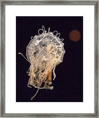Think Jelly Framed Print