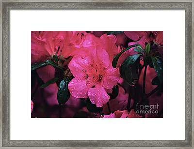 Thinking Of Home Framed Print by Patti Whitten