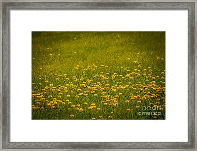 Thinking Of Spring Framed Print by Claudia M Photography