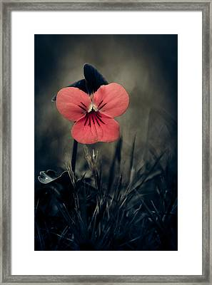Thinking Pansy Framed Print by Loriental Photography