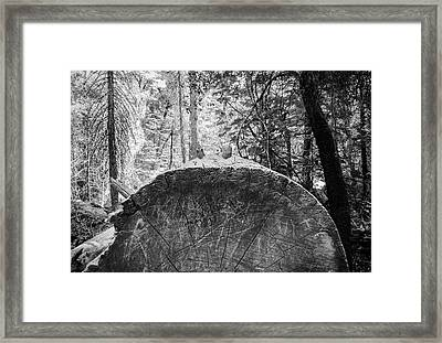 Thinking Tree- Framed Print