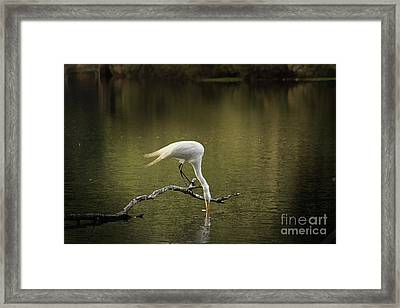 Framed Print featuring the photograph Thirst by Kim Henderson