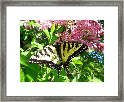 Thirst Of Life  Framed Print by Robert  Nacke