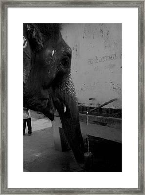 Thirsty Elephant Framed Print by Deepak Pawar
