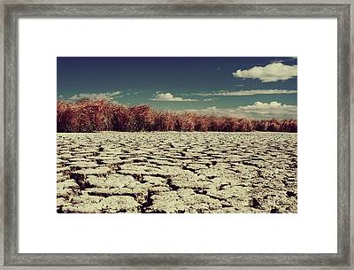 Thirsty Framed Print by Laurie Search