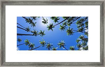 Palms Overhead Framed Print