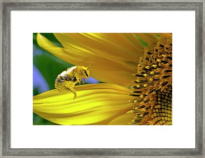 This Bee Needs A Bath Framed Print