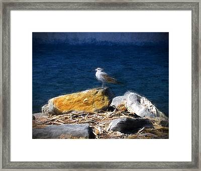 This Gull Has Flown Framed Print