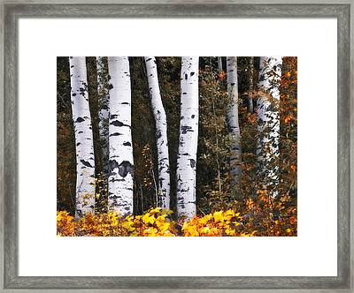This Is British Columbia 17 - The Aspen Forest Framed Print by Paul W Sharpe Aka Wizard of Wonders