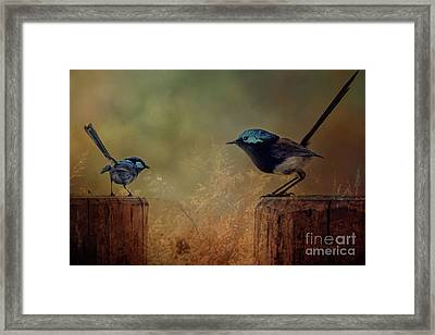 This Is My Perch Framed Print