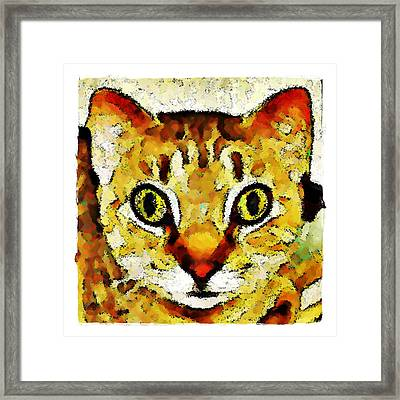 This Is My Surprised Face Kitty Framed Print by Terry Mulligan