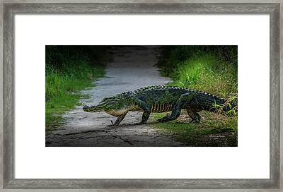 This Is My Trail Framed Print