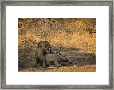 This Is Namibia No.  4 - Come On Bro I Wanna Play Framed Print by Paul W Sharpe Aka Wizard of Wonders