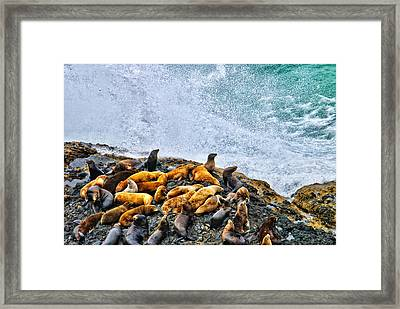 This Is Oregon State No.18 - Sea Lion Splash Framed Print by Paul W Sharpe Aka Wizard of Wonders