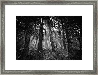 This Is Our World - No.1 - Forest Floor Morning Mist Bw Framed Print by Paul W Sharpe Aka Wizard of Wonders
