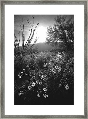 This Is The Furthest I Will Go. Never The Same Again. Framed Print