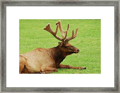 This Is The Life Framed Print by Michael Peychich