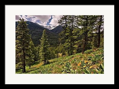 Okanogan National Forest Framed Prints