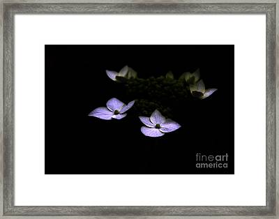 This Little Light Of Mine Framed Print by Amanda Barcon