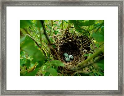 This May Be The Nest And Aggs Framed Print