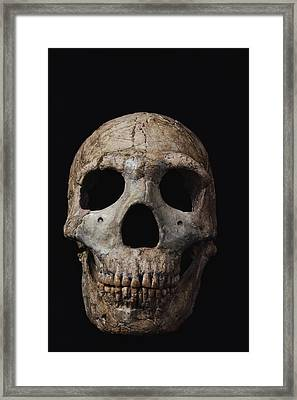 This Neandertal Skull From Wadi Amud Framed Print